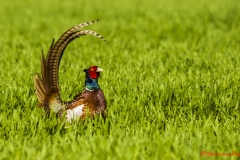 Vogels Krabbenkreek_32