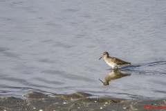 Vogels krabbenkreek_16