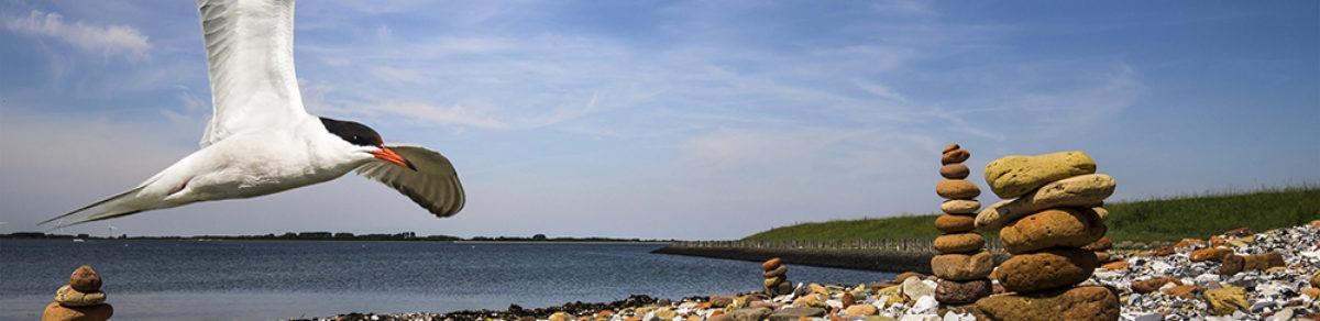 De Krabbenkreek bij het eiland Tholen.